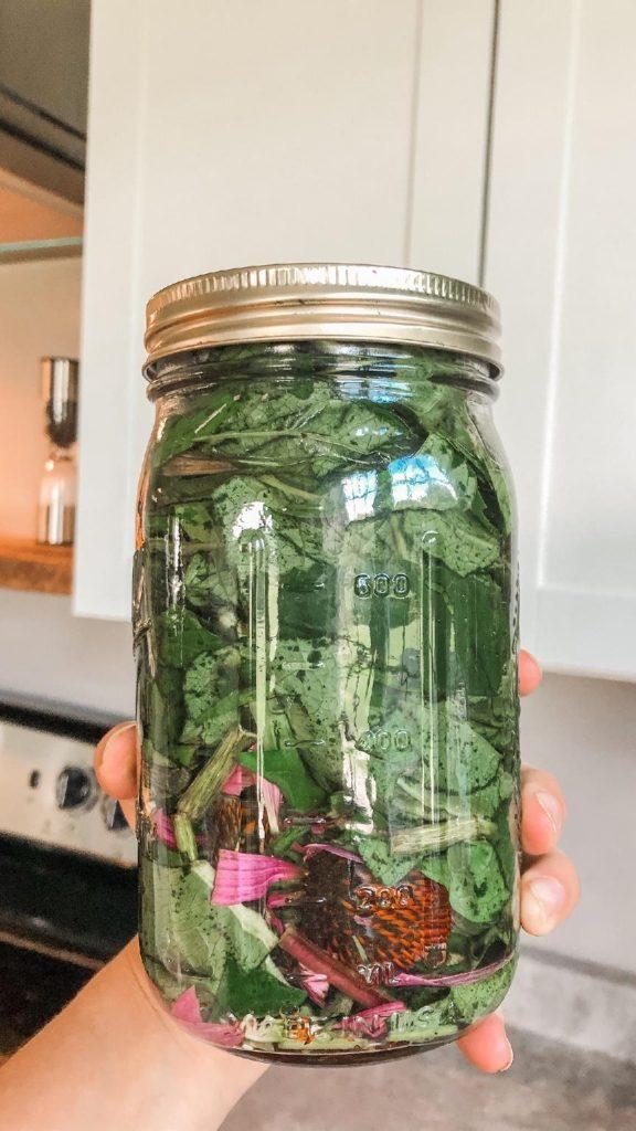 fresh echinacea tincture in mason jar