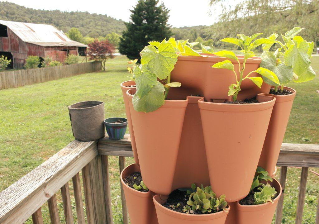 vegetables growing in greenstalk vertical garden on deck