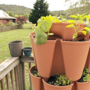 greenstalk vertical garden with plants growing on deck