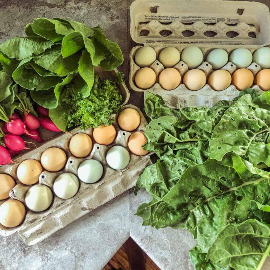 radishes and lettuce and eggs and swiss chard harvested in fall